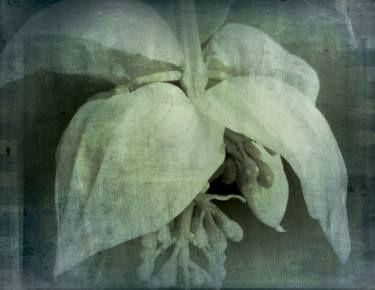 "Saatchi Art Artist Dagmar Lukes; Photography, ""White Flower"" #art"