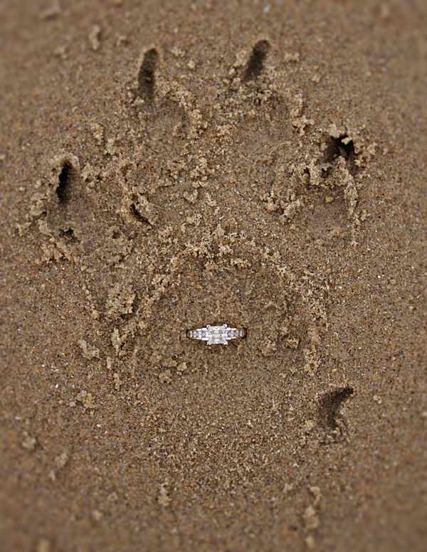 Engagement Ring in Dog Paw - mazelmoments.com