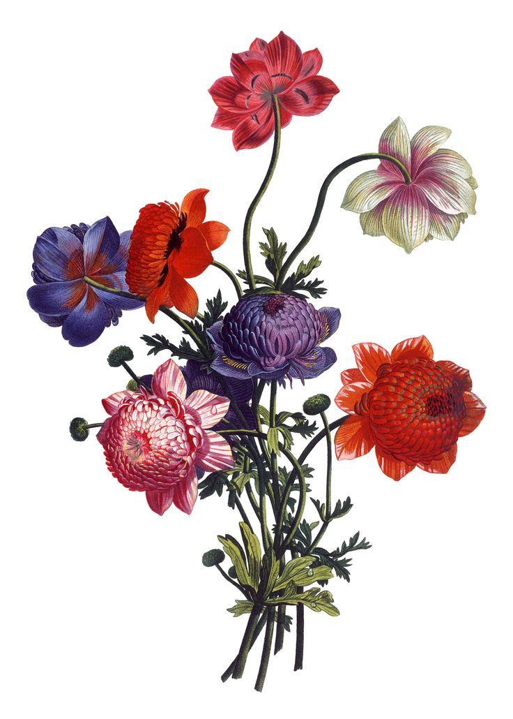 Flower Line Drawing Vintage : Best flower drawings ideas on pinterest geometric