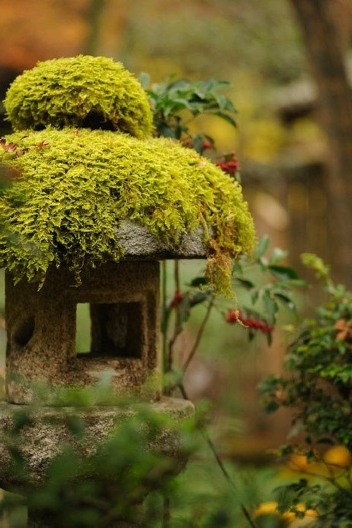 1000 id es propos de jardin de mousse sur pinterest. Black Bedroom Furniture Sets. Home Design Ideas