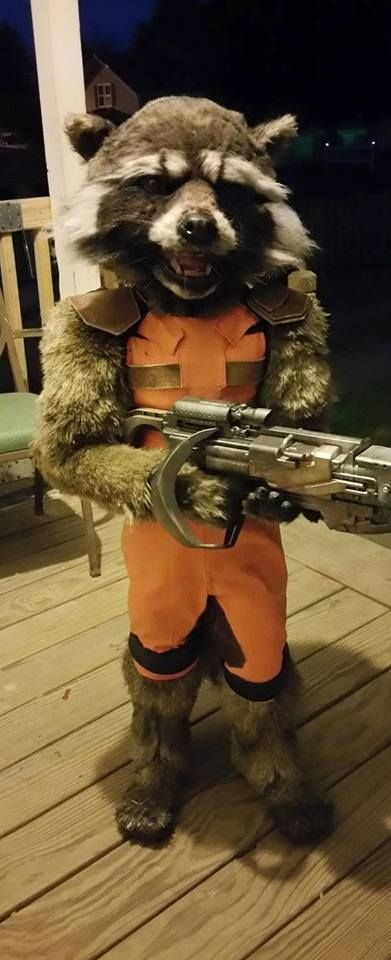 We find out more about the incredible Guardians of the Galaxy Rocket Raccoon costume made by the coolest mom in the cosmos.