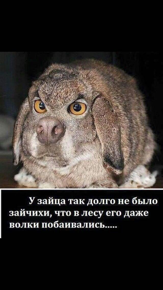 #мемы #шутки #приколы