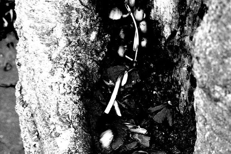 Selhurst park, mushrooms growing in a tree- texture.