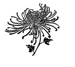watercolor spider mums | spider mum stencil
