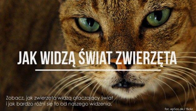 INFOGRAFIKA: Jak widzą zwierzęta- wejdź na stronę