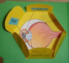 Eye Spy! Lapbook Project