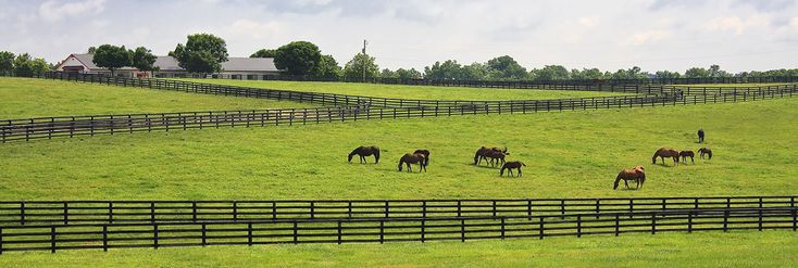 Bringing a new horse home is often an exciting time, but introducing that horse to your herd can also be quite challenging and risky. Horses rely on