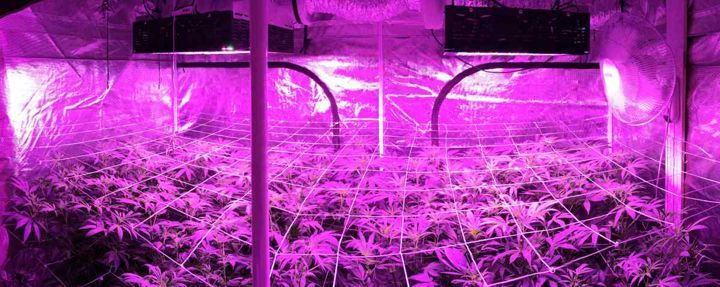 LED vs HPS Grow Lights - estagecraft LED Grow Lights