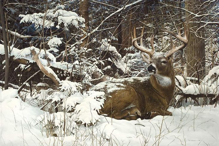 Whitetail deer buck painting by Bob Travers