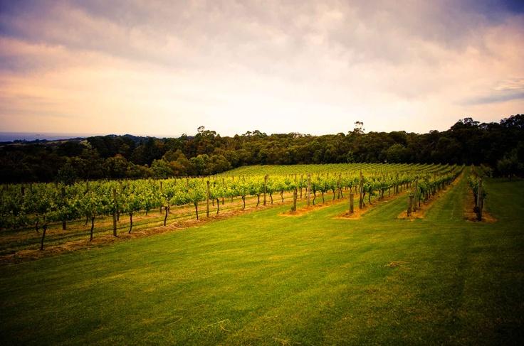 Red Hill Estate, Mornington Peninsula Winery http://lovethepen.com.au/profiles/red-hill-estate/