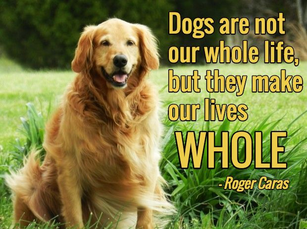 """""""Dogs are not our whole life, but they make our lives whole."""" - Roger Caras"""