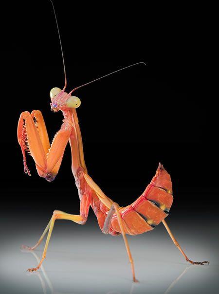 Excelentes fotos de insectos | Clip de Película