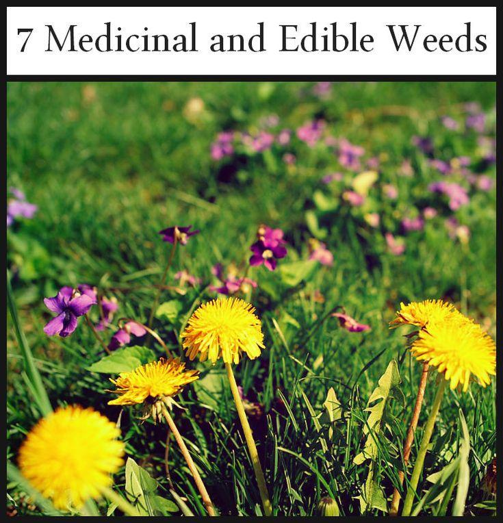7 Medicinal and Edible Weeds