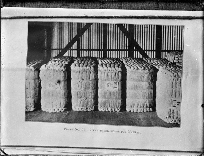 Bales of flax fibre ready for market  -  flax fibre (often known as New Zealand hemp, or New Zealand flax, but more correctly known as phormium tenax).  Bales of flax fibre ready for market. Godber, Albert Percy, 1875-1949 :Collection of albums, prints and negatives. Ref: APG-1438-1/4-G. Alexander Turnbull Library, Wellington, New Zealand. http://natlib.govt.nz/records/22336686