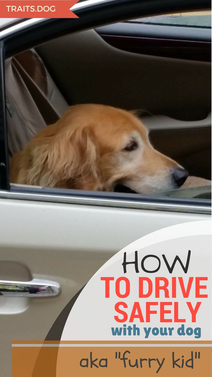 We love our pets and want them to be with us, so we take them with us on short trips by car, and even on vacation with us. Here are some important ways to be better prepared and avoid or deal with an accident. Read more by clicking on this pin.