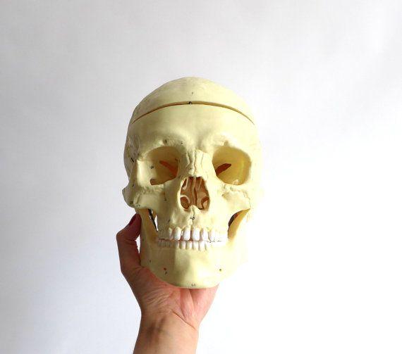 vintage skull anatomy model por BerlinoVintage en Etsy