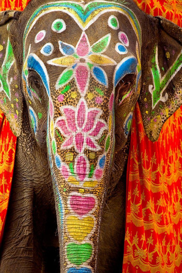 face painted elephant   india   Pinterest