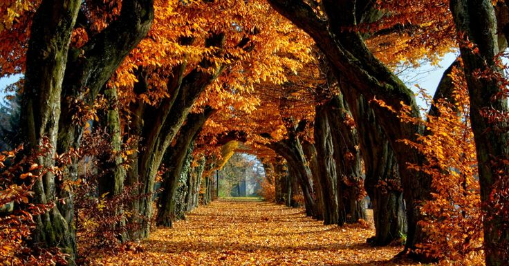 L'autunno è il periodo ideale per una piccola vacanza intelligente e rilassante. Lontano dalla ressa estiva. Ecco due bellissime possibilità di relax.