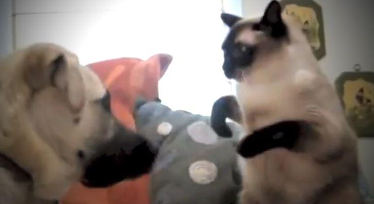 Visszhangzik a nevetésemtől az iroda! :D Egyik macskás videó jobb mint a másik, de ami 1:42-nél van, azon egész nap fulladozni fogsz a nevetéstől!