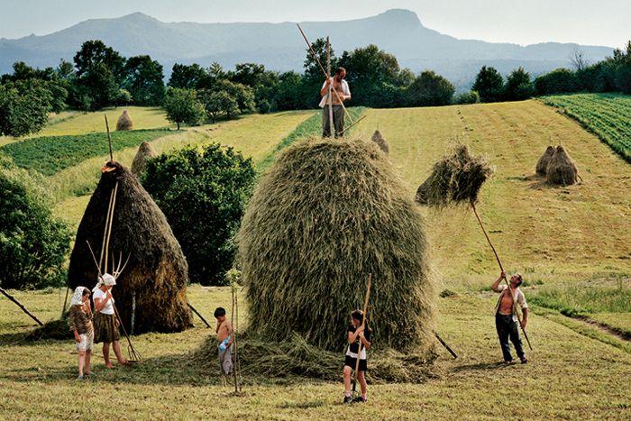 Promenade au coeur de la Roumanie rurale, dans les champs de Transylvanie - National Geographic France