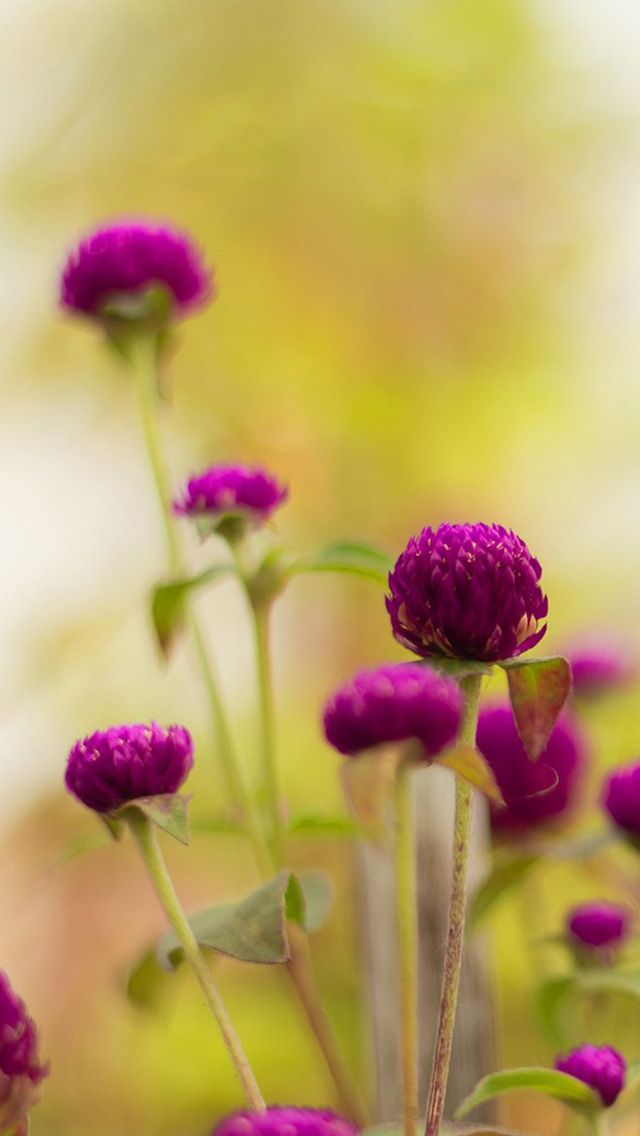 Bokeh Spring Flowers Iphone Wallpaper Color Glitter
