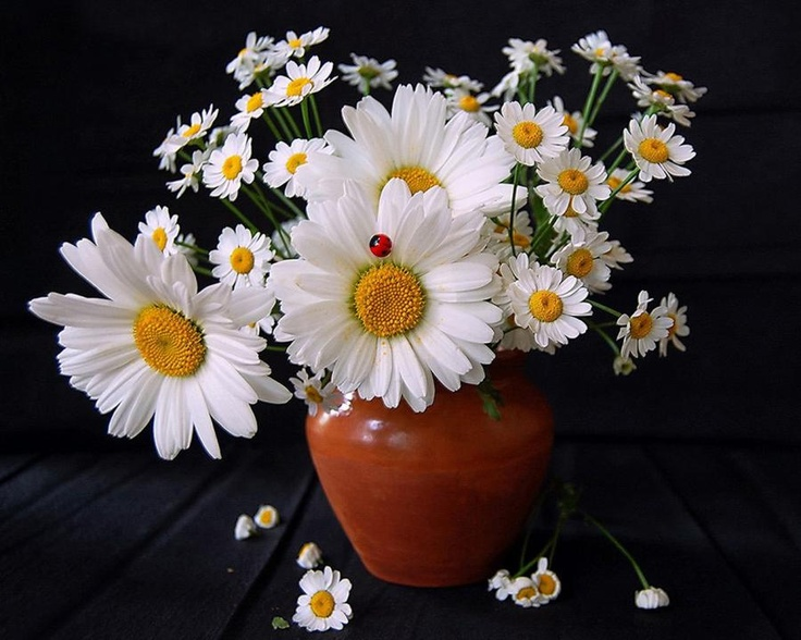 margheriteBeautiful Flower, Bouquets, Daisies, Languages Of Flower, Wedding Flower, Floral Arrangements, Gardens Plants, Cut Flower, Favorite Flower
