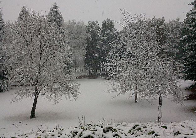 South African snow at Abberley Guest House in Balgowan.