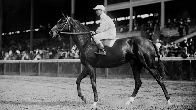 17 Best Images About Thoroughbreds Standardbreds Famous