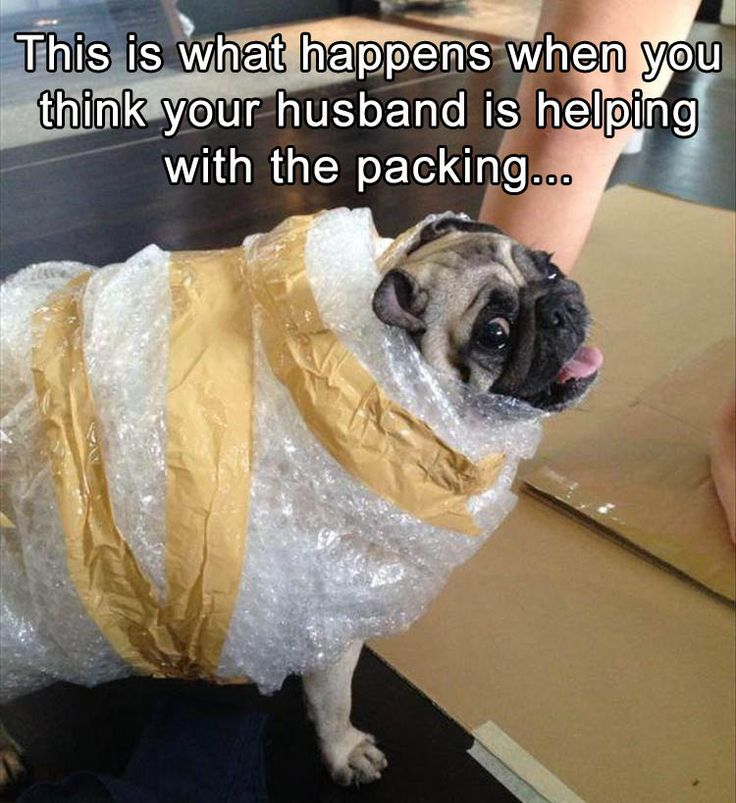 Funny Animal Pictures Of The Day – 25 Pics