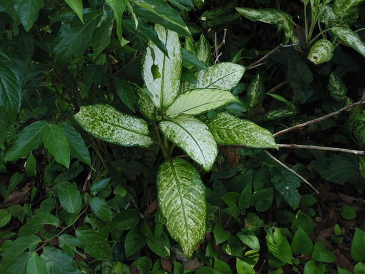 Mejores 117 im genes de flores y plantas tropicales en for Plantas ornamentales tropicales