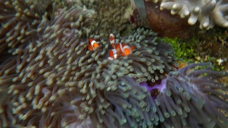 Sorido Bay Raja Ampat, 印尼四王群岛, Snorkeling in Paradise  Feb 2014