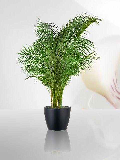 Venta de plantas | Plantas de ornato para eventos corporativos