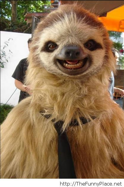Something Sooo Sweet About Those Dark Brown Eyes And White Teeth I Love Sloths  Creatures And