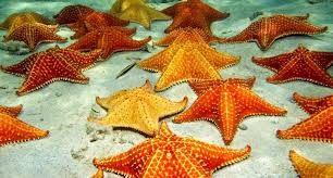 Anatomi Bintang laut – Mughni Ali Abdillah