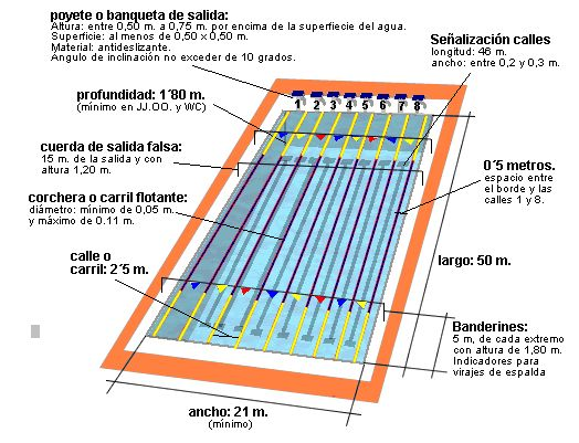 Piscina olimpica medidas google search piscina for Calculo estructural de una piscina
