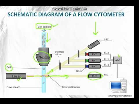 FLOW CYTOMETRY Part 1