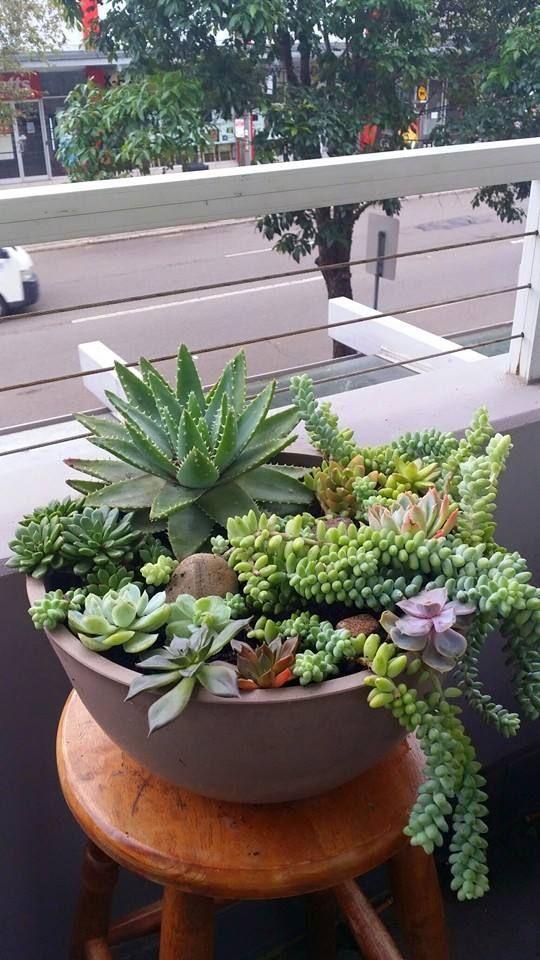 Nice succulent arrangement by Sophie Chkheidze