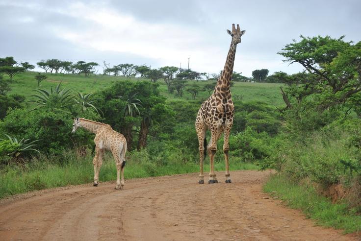 Tala Game Reserve, KwaZulu-Natal
