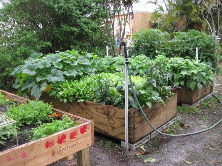 35 best images about gardening with the roji en staff on for Fun vegetable garden ideas