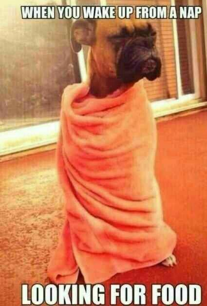 When you wake up from a nap looking for food.