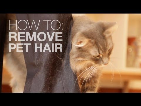 How To Remove Pet Hair Without A Lint Roller