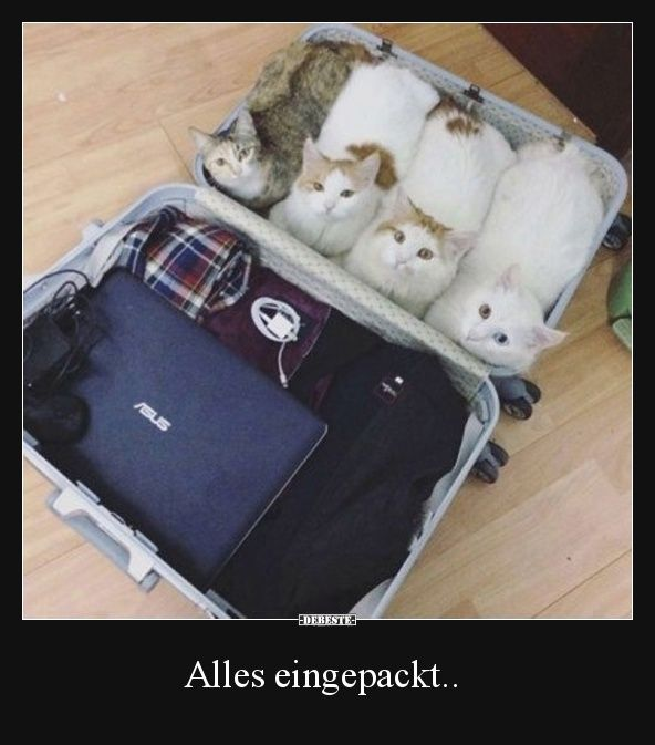 Alles eingepackt.. | Lustige Bilder, Sprüche, Witze, echt lustig – Laura R.