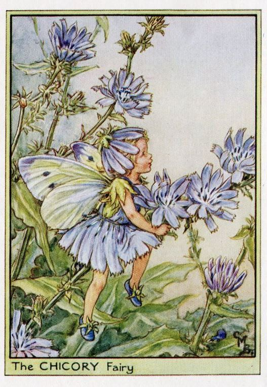 Chicory Flower Fairy Vintage Print c1950 Cicely by TheOldMapShop