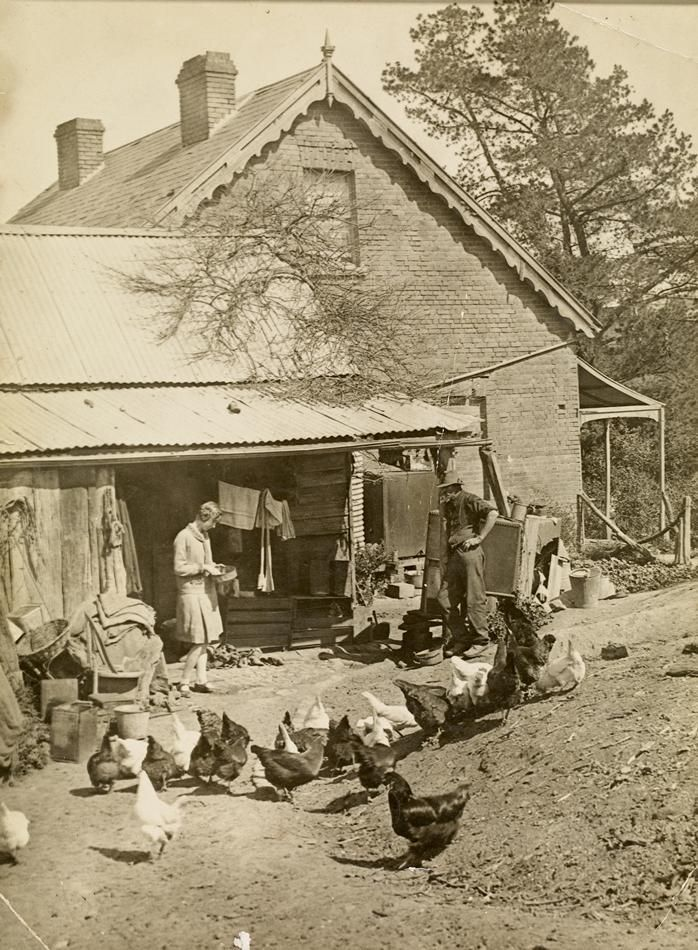 Feeding the Chooks, 'Willis Vale' Homestead, Greensborough, Victoria durng the Depression