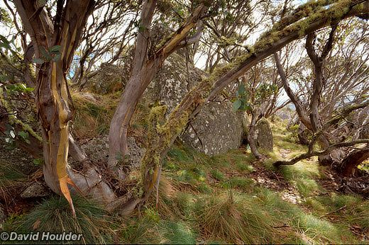 http://davidhoulder.com/_media/ext/walks/namadgi/gingera-1.jpg Mt Gingera Namadgi National Park