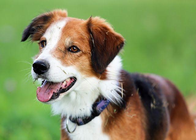 Geliebter Arschlochhund Hunde Tierheim Tiere