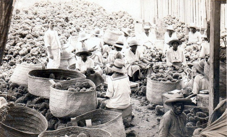 Trimming and sorting sponges, Nassau, posted 1924.