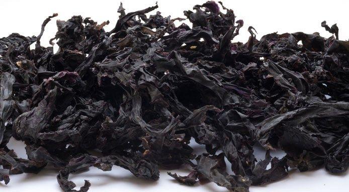 Edible Seaweed List: 8 Algae to Cook With