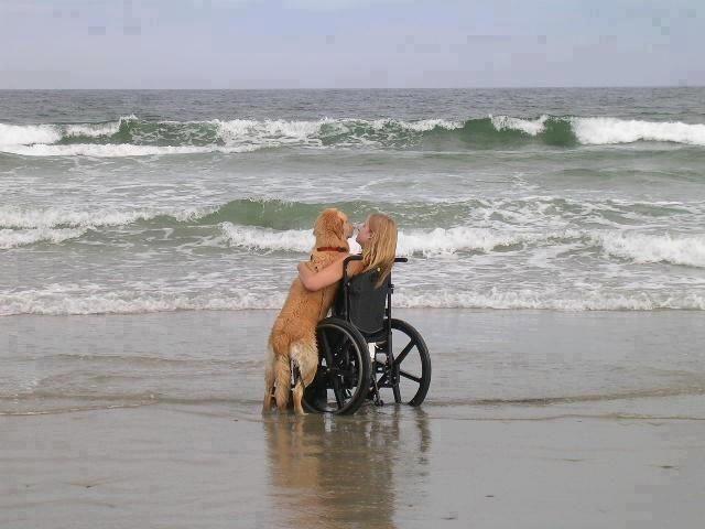 Beach Companion