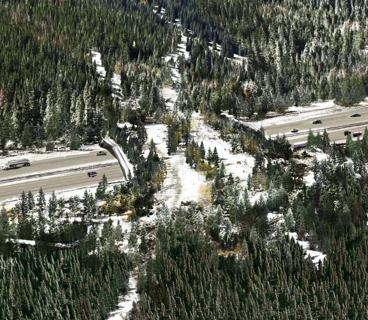 A Simple Concrete Bridge That Could Save America's Wildlife